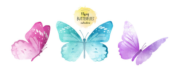 watercolor illustrations of cute multi-colored butterflies, drawings by hand, isolated on white background © ArdeaA