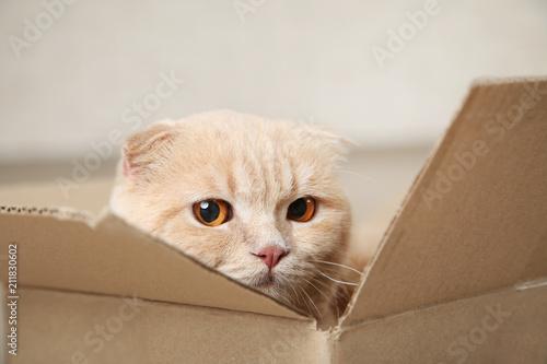 Ginger cat sitting in cardboard box - 211830602