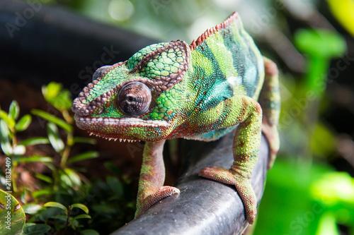 Aluminium Kameleon flora and fauna in vertical indoor reainforest