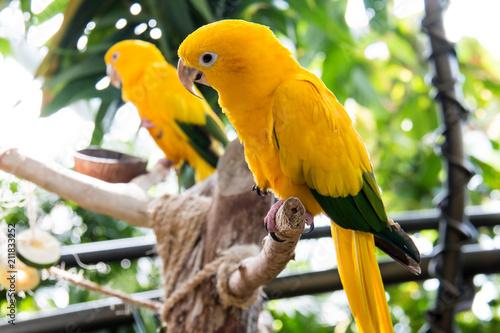 Fotobehang Papegaai flora and fauna in vertical indoor reainforest
