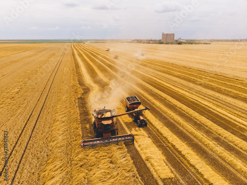 Fotobehang Zomer Harvester machine working in field . Combine harvester agriculture machine harvesting golden ripe wheat field. Agriculture. Aerial view. From above.