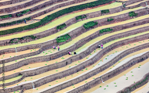Fotobehang Lavendel Rice fields on terraced. Fields are prepared for planting rice. Lim Mong, Huyen Mu Chang Chai, Northen Vietnam