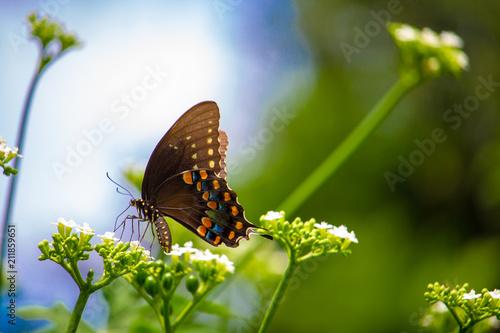 Beautiful butterflies  - 211859651