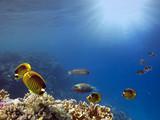 Underwater scene. Coral reef. - 211884461