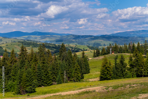 Fotobehang Zomer Beautiful mountain green slopes with growing tall firs stretching away to the horizon line with gray clouds in the sky.