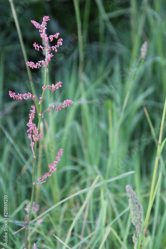 Fotobehang Lavendel Brin de folie