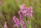 faune et flore  - 211890020