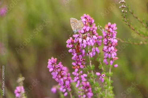 Fotobehang Lavendel faune et flore