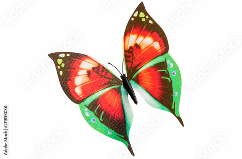 butterfly isolated - 211893036