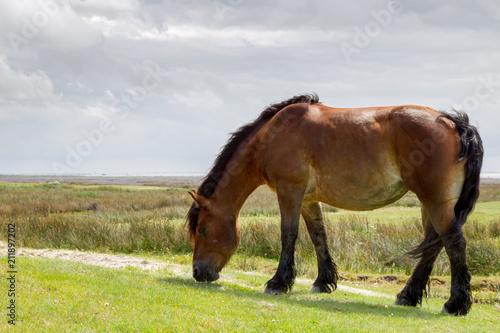 Fotobehang Noordzee Pferd auf der Weide auf der ostfriesischen Nordseeinsel Juist in Deutschland, Europa.