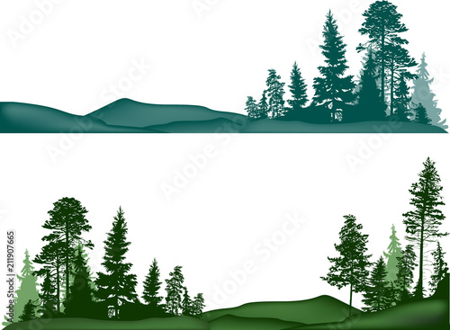 high pines trees in two landscapes on white - 211907665