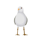Seagull, gray and white sea bird, front view vector Illustration on a white background - 211911657