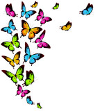 beautiful color butterflies,set, isolated  on a white - 211916624
