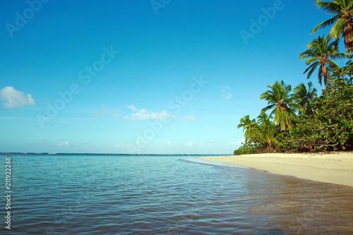Foto Murales Green palm trees on caribbean beach.