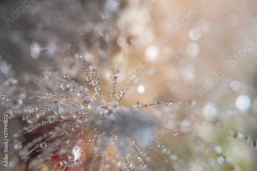 Macro drops of water on fur - 211940672
