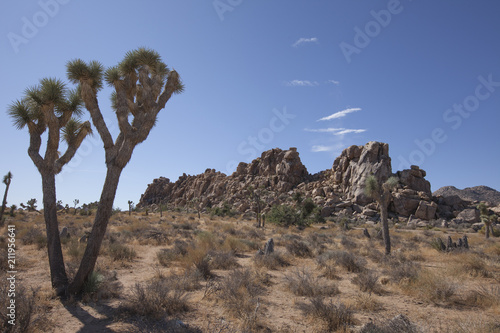 Fotobehang Cappuccino Joshua Tree with rock outcropping