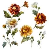 Watercolor floral composition - 211958024