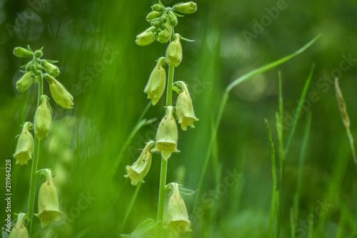 Fotobehang Groene Forest flora