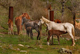 Russia. The South Of Western Siberia. Free pastures in the valleys of the Altai Mountains - 211964495