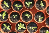 Homemade plant nursery. Group of pots with plants growing from seeds - 211968878