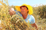 Overweight woman enjoying life during summer vacations. Happy obese farmer relaxing on wheat field. Healthy lifestyle concept. - 211976260