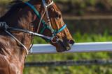 Race Horse Rider Training Track Landscape Morning  - 211978425