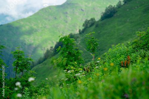 Plexiglas Groene beautiful flowers in Alpine meadows