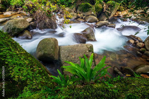 green plants on stone with waterfall flowing - 212018639