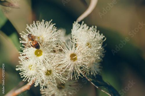 Aluminium Paardenbloemen Pollinating Bees