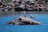 Seagulls - 212029447