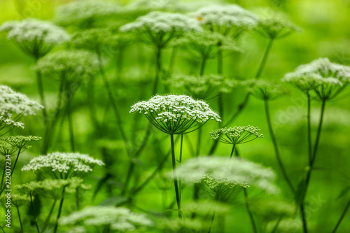 White flowers on the grass in the park