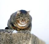 Photo of a beautiful macro furry fat cat