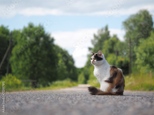 Fotobehang Kat Beautiful cat on the country path