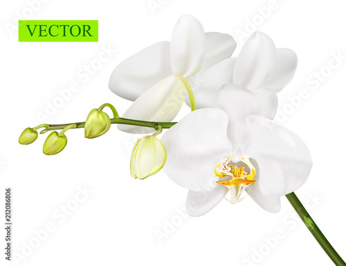 Fototapeta Orchid branch isolated on white background.