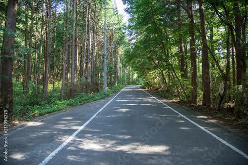 新緑の道路