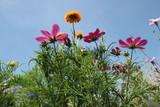 Wildblumen auf einer Wiese im Sommer