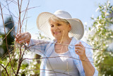gardening and people concept - happy senior woman with pruner taking care of flowers at summer garden - 212104841