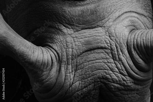 Fotobehang Neushoorn Nashorn Falten