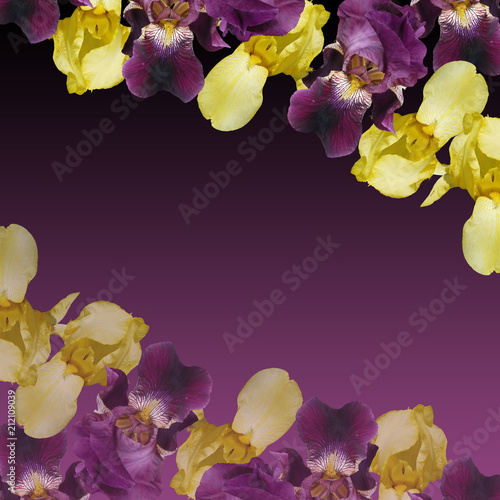 Fotobehang Iris Beautiful floral background of irises. Isolated