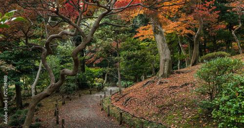 Japanese garden in Tokyo