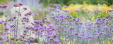 The panoramic view - garden flowers close up - 212121423