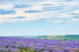 lavender field with poppy flowers, beautiful summer landscape - 212130079