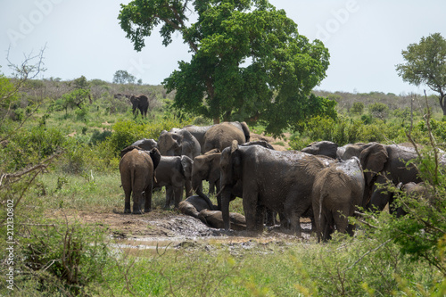 Fototapeta Elefant, Südafrika, Afrika