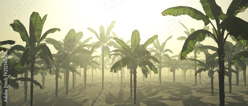 palms in the morning. Sunrise over a palm grove. Palms in the fog. 3D rendering - 212140406
