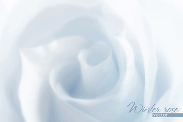 Winter rose. Pure background with blurred light blue rose. Vector