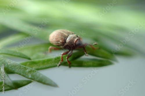 Insect close-up - 212144480