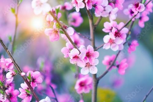 Fototapeta Blossom.