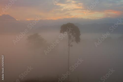 Aluminium Cappuccino Beautiful landscape of foggy sunrise in Borneo, Asia