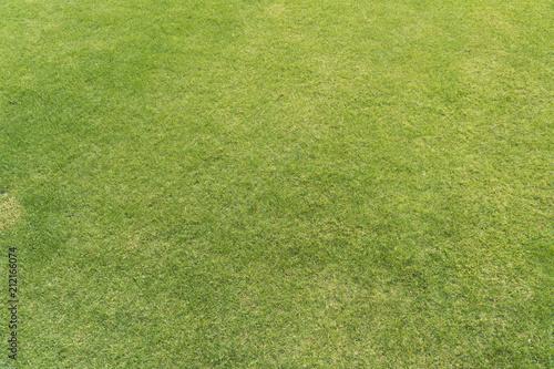 芝生・背景素材用