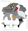 Bird Pelican Set Cartoon Vector Illustration